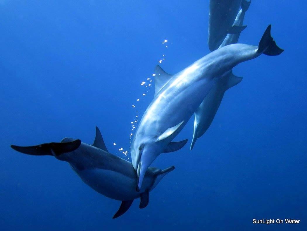 myananda schwimmen mit delphinen ohana healing retreat spirituelle heilreise hawaii. Black Bedroom Furniture Sets. Home Design Ideas